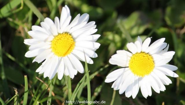 Naturbilder und Blumen